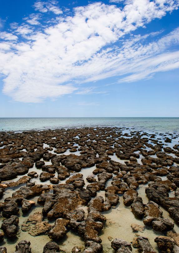 Stromatolites, Shark Bay, WA