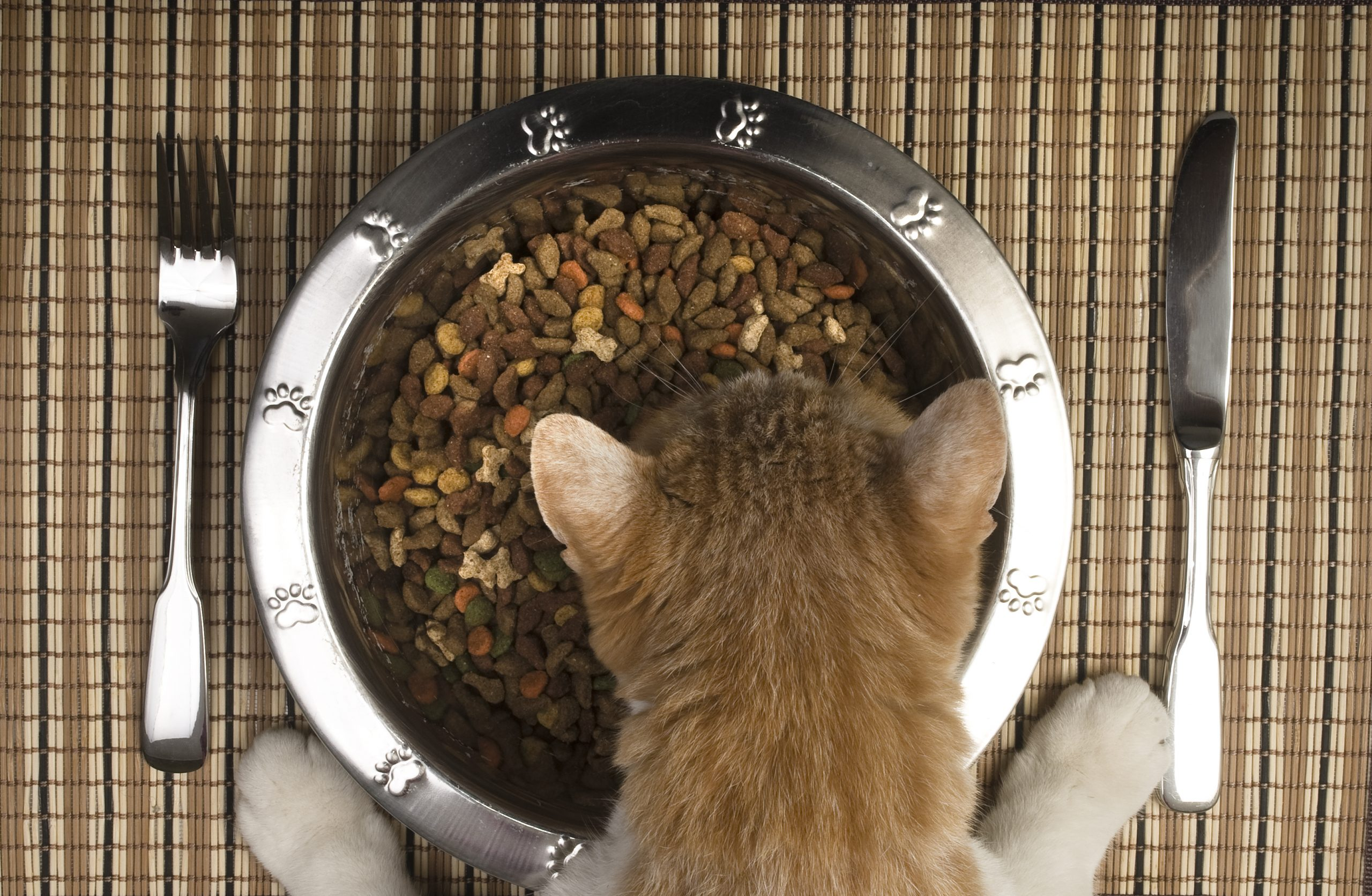 Accepted: Cat and dog food