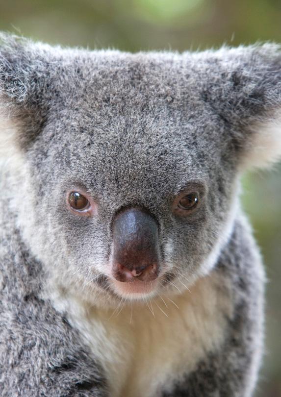 Australia Zoo, Beerwah, QLD