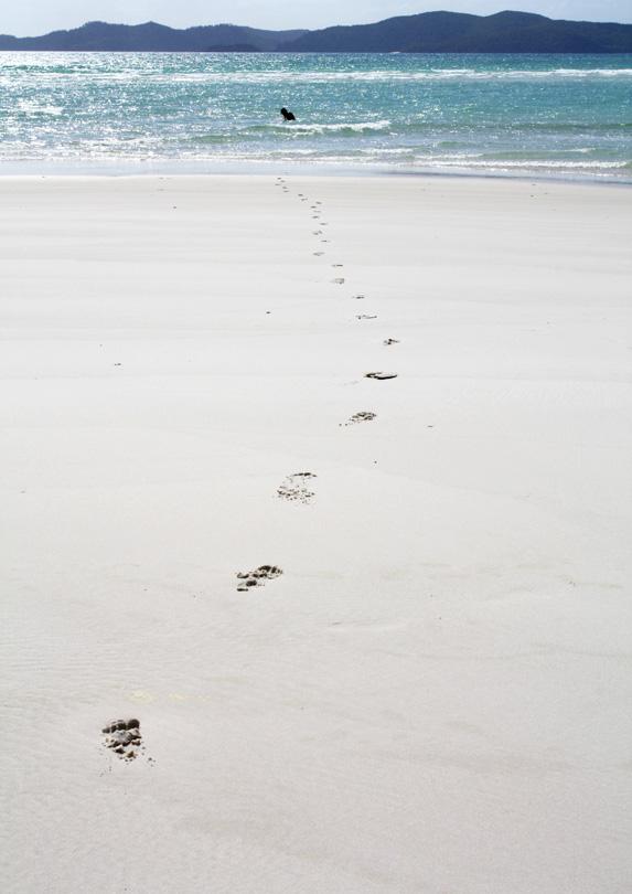 Whitehaven Beach, Whitsunday Island, QLD