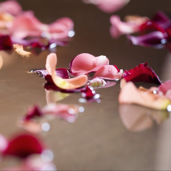 Rose petals on a dark surface