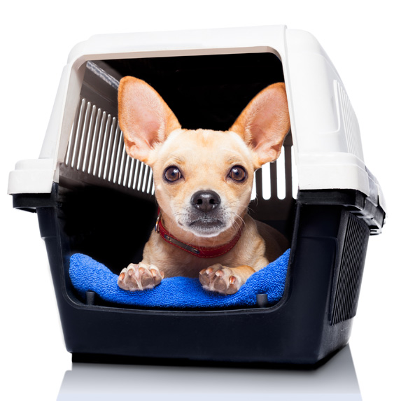dog in carrier getting ready for plane