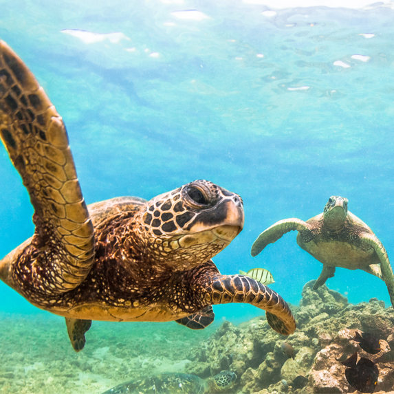 Diving in Hawaii