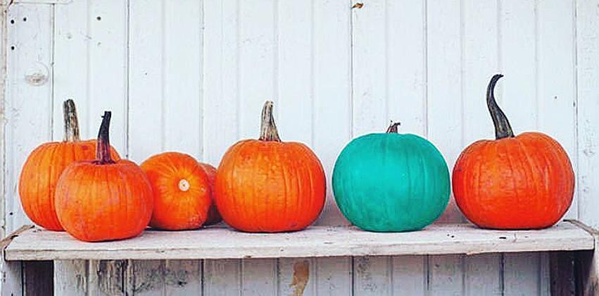 teal_pumpkin