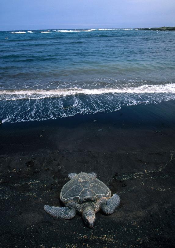 8. Punalu'u Beach, Hawai'i