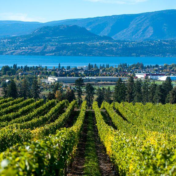 Vineyards near Kelowna, British Columbia