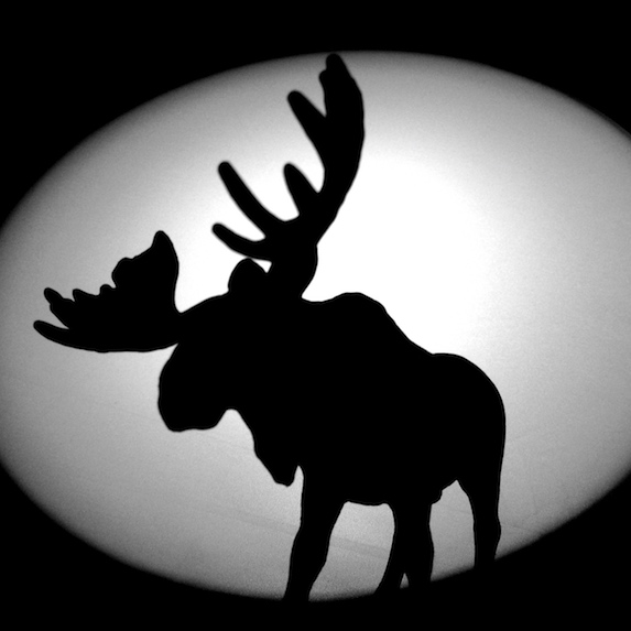 Silouette of a moose