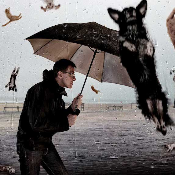 cats and dogs falling from sky on man with umbrella