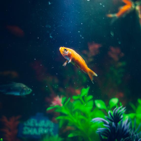 Fish Lifespan