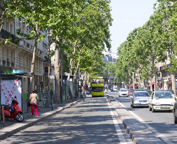 Trees line a beautiful street filled with shops on Boulevard Saint Germain in Paris