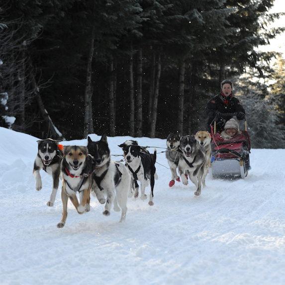 Dog sledding In Whistler
