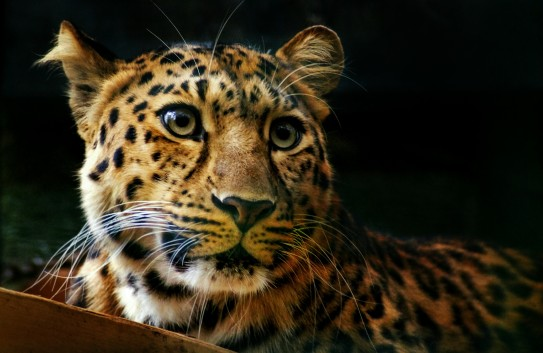 16 of the Planet's Most Endangered Animals