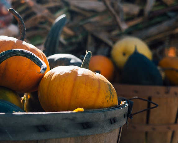 Wooden barrels filled with pumpkins