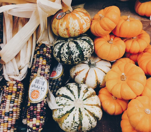 Colourful pumpkin varieties and corn