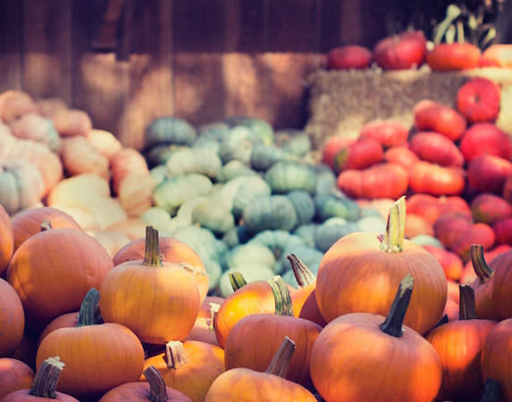 A variety of colourful pumpkins