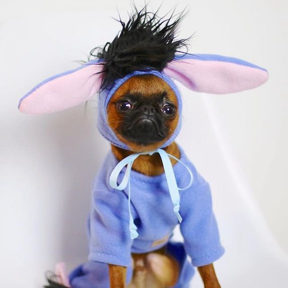 best-halloween-pet-costumes-eeyore