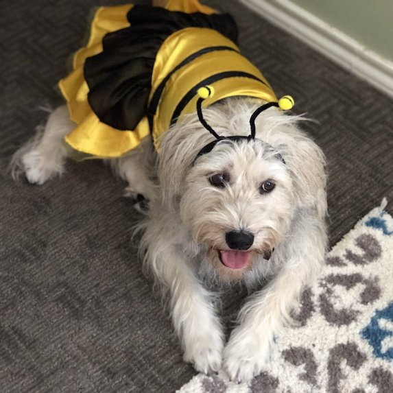 best-halloween-pet-costumes-bee