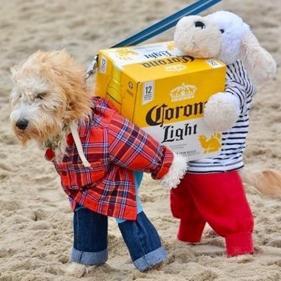 best-halloween-pet-costumes-beer