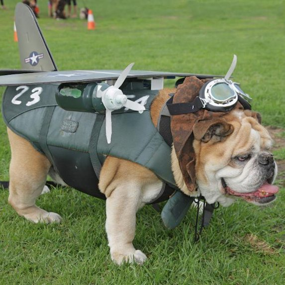 best-halloween-pet-costumes-plane