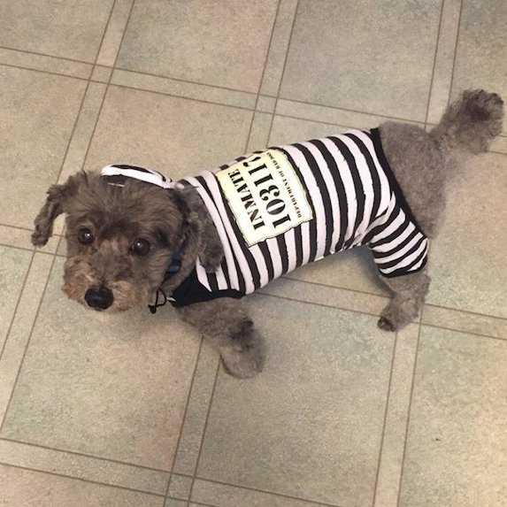 best-halloween-pet-costumes-convict