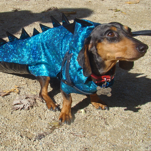 best-halloween-pet-costumes-dinosaur