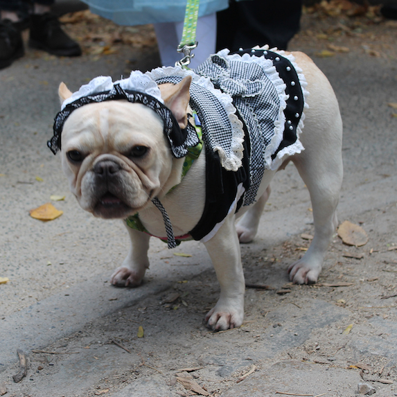 best-halloween-pet-costumes-french-maid