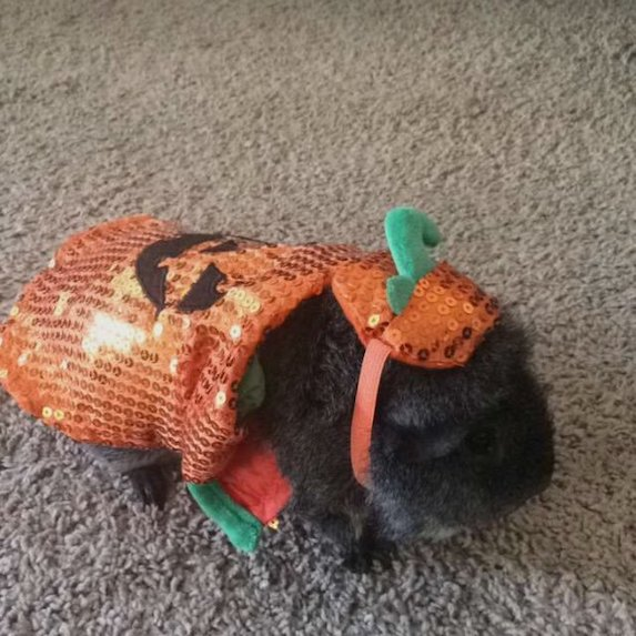 best-halloween-pet-costumes-pumpkin