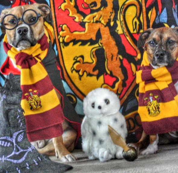 best-halloween-pet-costumes-harry-potter