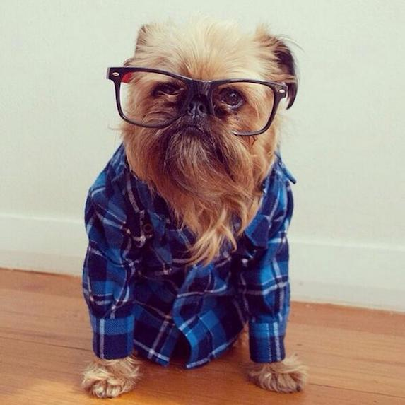 best-halloween-pet-costumes-hipster