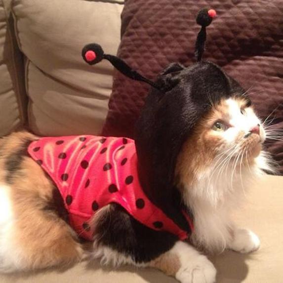 best-halloween-pet-costumes-ladybug
