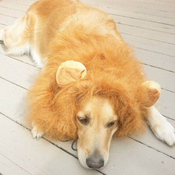 best-halloween-pet-costumes-lion