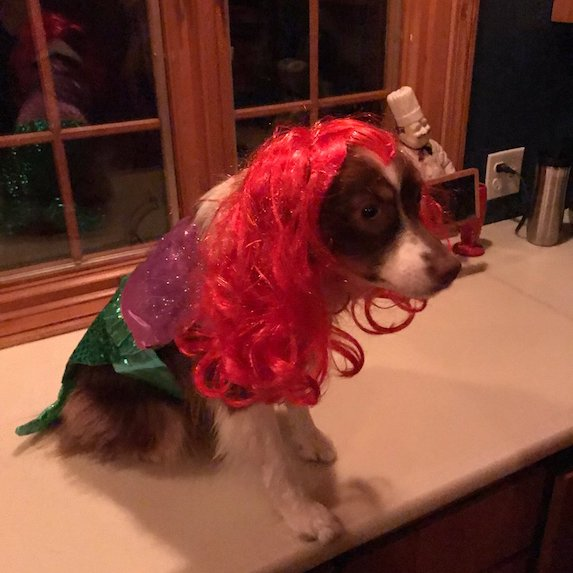best-halloween-pet-costumes-the-little-mermaid