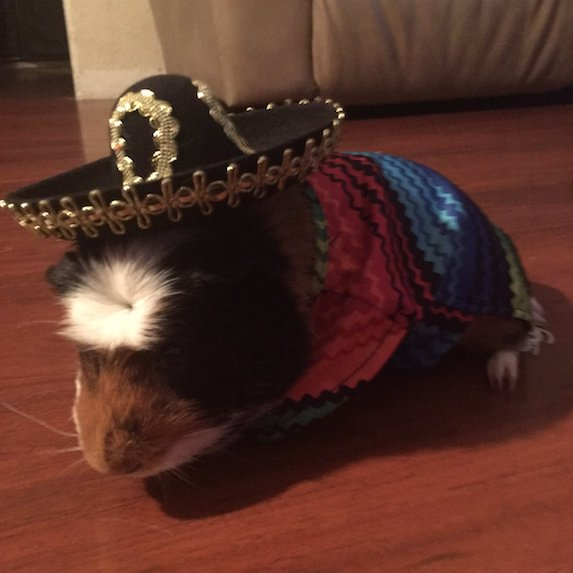 best-halloween-pet-costumes-sombrero