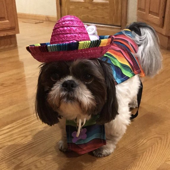 best-halloween-pet-costumes-sombrero-dog
