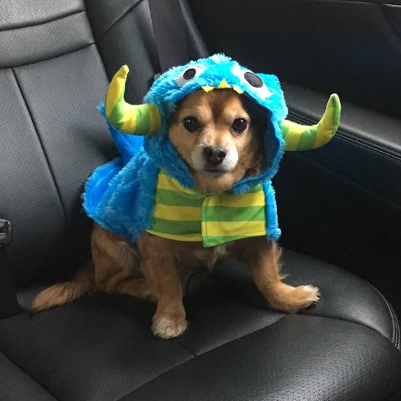 best-halloween-pet-costumes-dragon