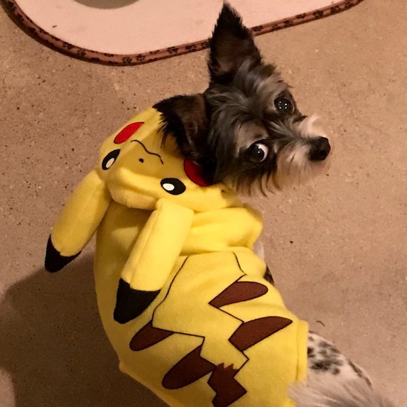 best-halloween-pet-costumes-pikachu