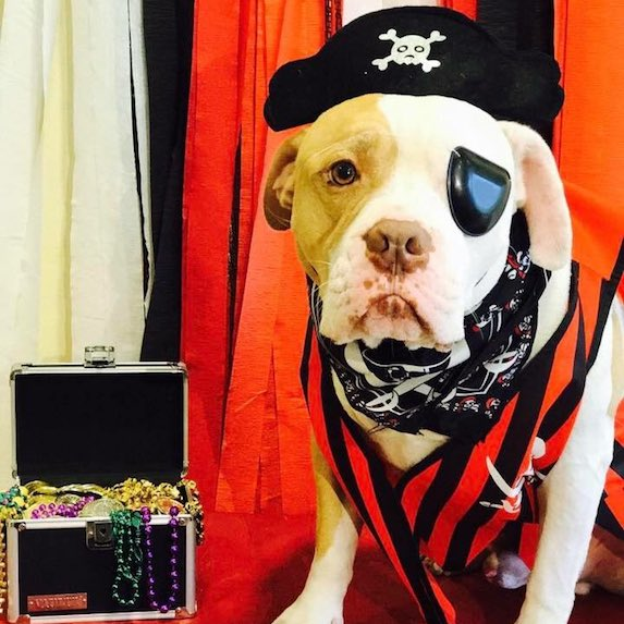 best-halloween-pet-costumes-pirate