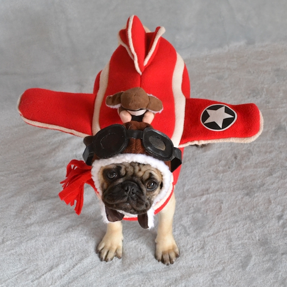 best-halloween-pet-costumes-pilot