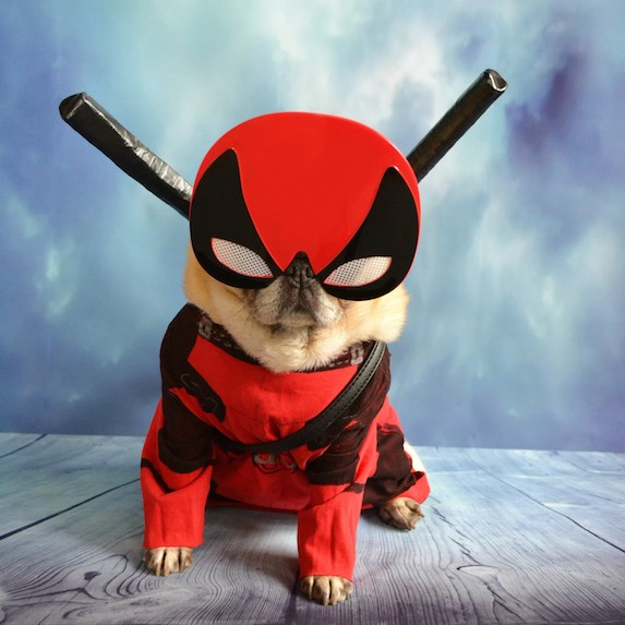 best-halloween-pet-costumes-deadpool