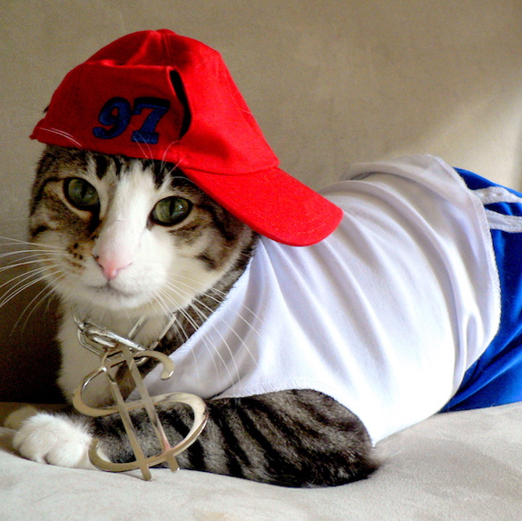best-halloween-pet-costumes-gangsta