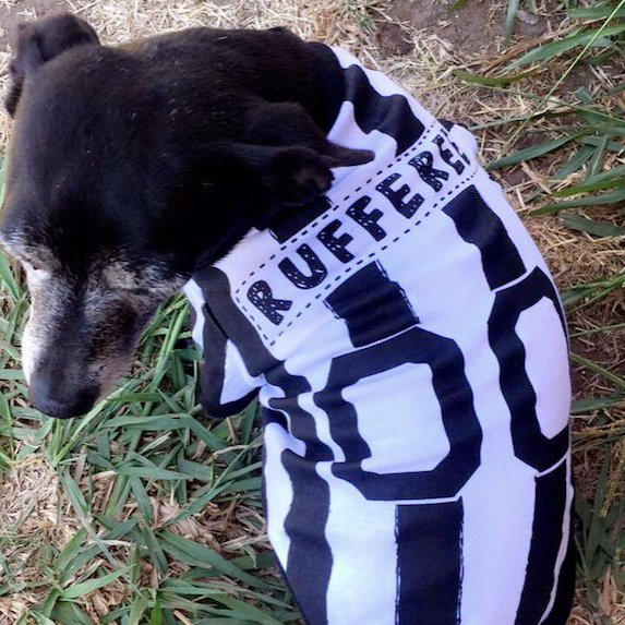 best-halloween-pet-costumes-referee