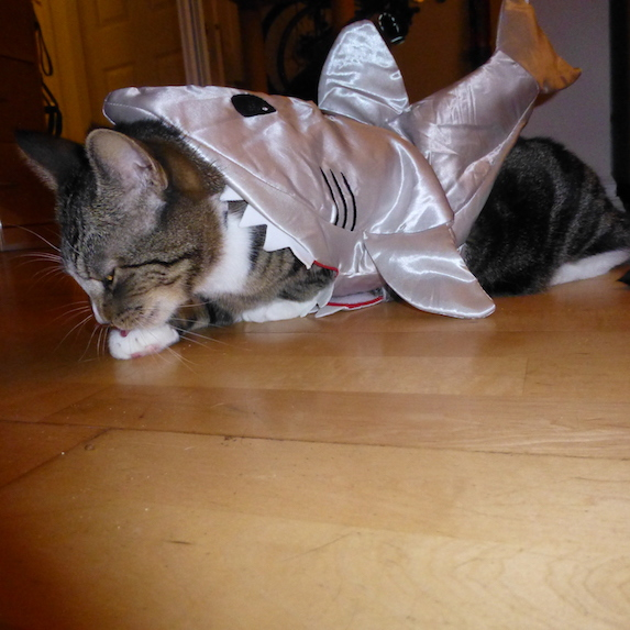 best-halloween-pet-costumes-shark