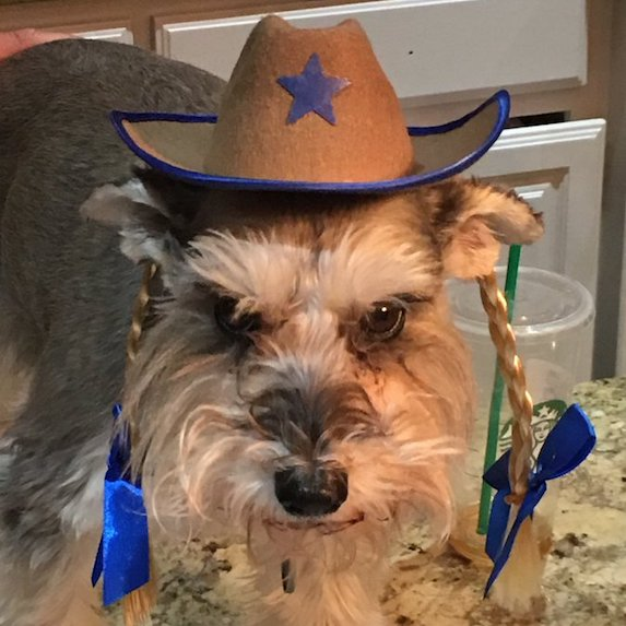 best-halloween-pet-costumes-cowgirl