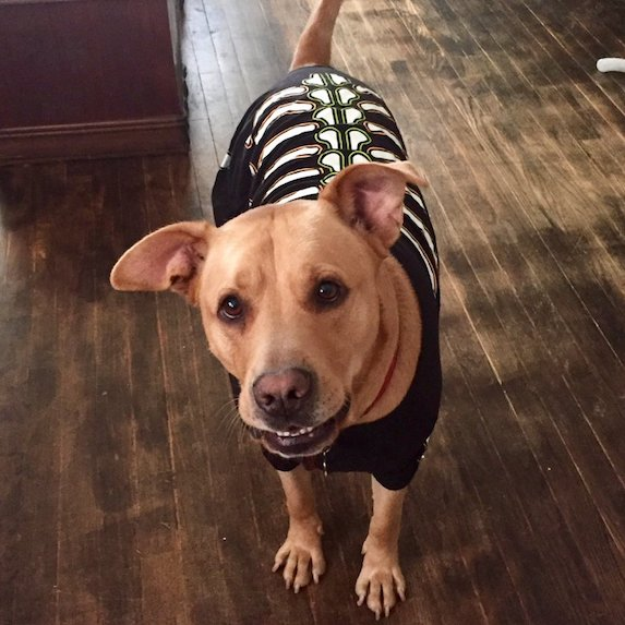 best-halloween-pet-costumes-skeleton