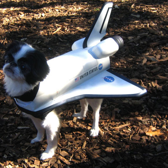 best-halloween-pet-costumes-space-shuttle