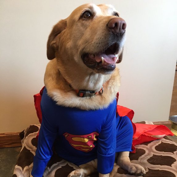 best-halloween-pet-costumes-super-dog