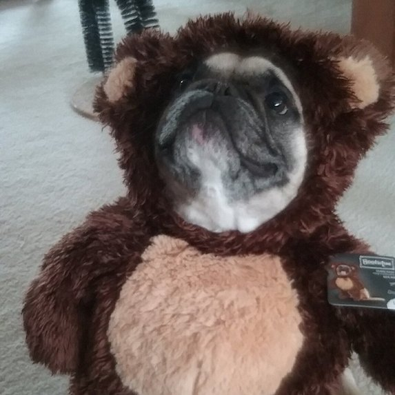 best-halloween-pet-costumes-ewok