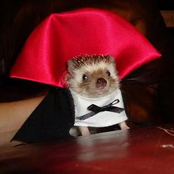 best-halloween-pet-costumes-dracula