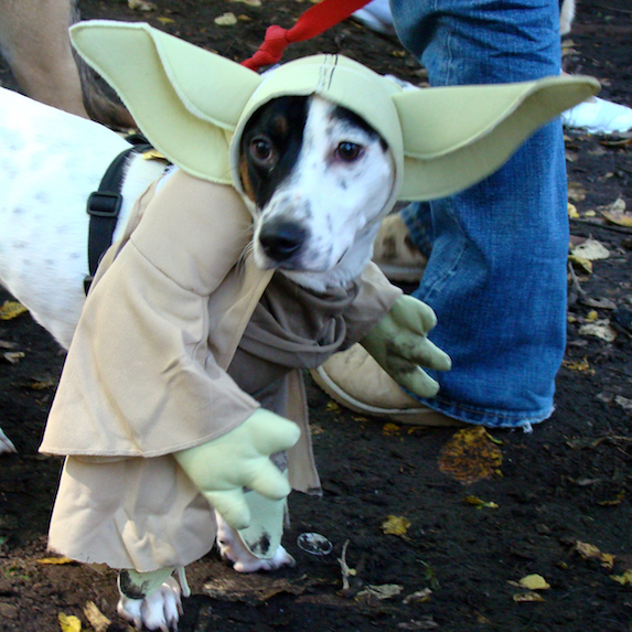 best-halloween-pet-costumes-yoda