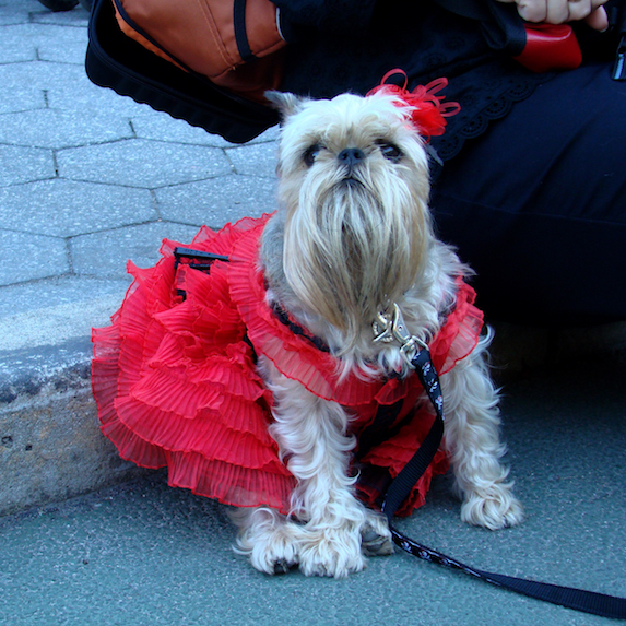 best-halloween-pet-costumes-bearded-lady